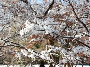 Shinjyuku Garden Snow (2)_S.JPG