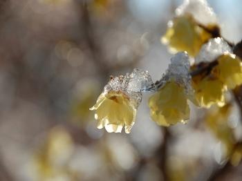 Shinjyuku Garden Snow (8)_S.JPG